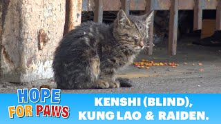 Blind kitten sits in a parking lot and wonders how will he survive. by Hope For Paws