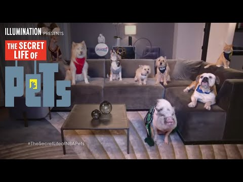 The Secret Life of Pets (Viral Video 'NBA Pets 1')