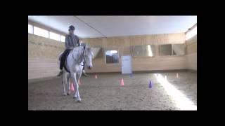 The Joy of a Clicker Trained Horse