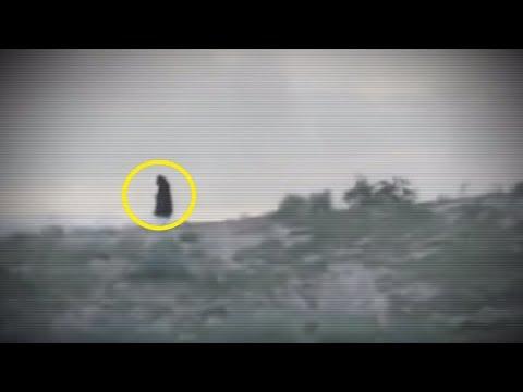 5 Grim Reapers Ca