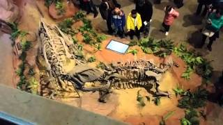 Zigong China  city pictures gallery : china sichuan zigong dinosaurs museum