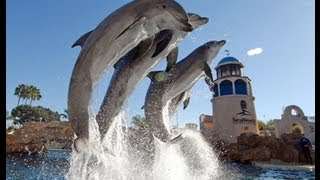 Dolphins Are More Amazing Than You Know - Watch This Fantastic Dolphin Show!