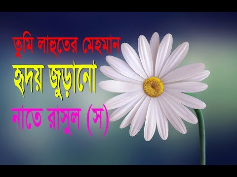 Naat E Rasul (SM) | Bangla Islamic Song 2018 |tumi lahuter mehman|islami song | Islamic culture bd |