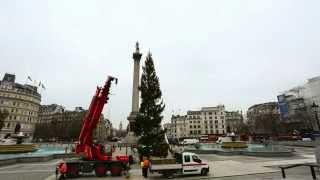 Christmas tree raised in Trafalgar Square   Time Lapse