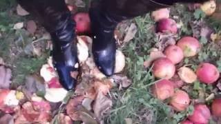 I've had these boots for acouple of years and they really didn't fit right so I used them to finish off more apples.  The stiletto heels really did damage to the apples spraying juice every time I stepped on one.  They also got really messy with mud and apple chunks as you can see - very naughty :)