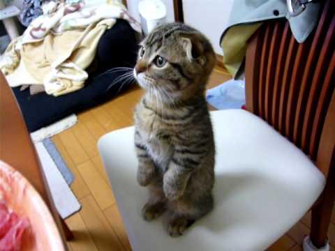 Kot czeka na obiad
