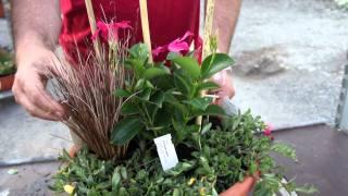 #395 Pflegeleichte Kübelbepflanzung (Dipladenia, Portulak, Carex)