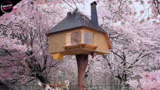 Video Orang Terkejut Melihat Rumah Diatas Pohon ini! 10 RUMAH POHON PALING UNIK DI DUNIA MP3, 3GP, MP4, WEBM, AVI, FLV Oktober 2018