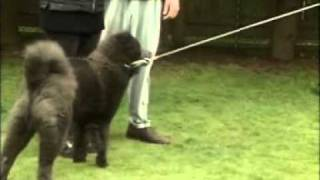 Dog Training - Control a Dominant Dog