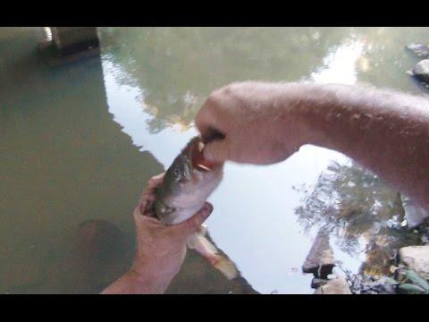 Roanoke Creek Fishing