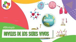 """Más sobre este video en: http://bit.ly/HbVBp1 ▷ Suscríbete: http://bit.ly/SubscribeEducatina ▷ ¡No olvides dar un """"Like"""" y..."""