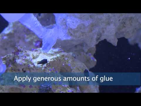 Coral Glue Instructional Video