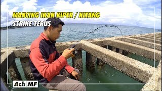 Download Video Mancing ikan kiper di trekdam Teluk Penyu Cilacap MP3 3GP MP4