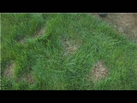 Lawn Care : How to Take Care of a Bald Spot in Your Lawn