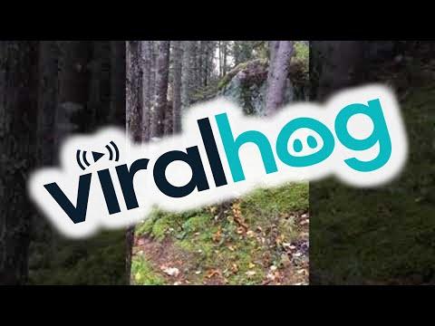 Metsä näyttää hengittävän kovassa tuulessa