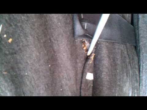 Video Bed Bugs attack mans chair! download in MP3, 3GP, MP4, WEBM, AVI, FLV January 2017