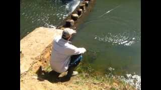 Dullstroom South Africa  city photo : Trout Fishing In Winter In Millstream, Dullstroom, South Africa