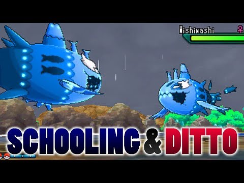 Can Ditto Transform Into School-Form Wishiwashi At Low HP In Pokemon Ultra Sun and Moon?