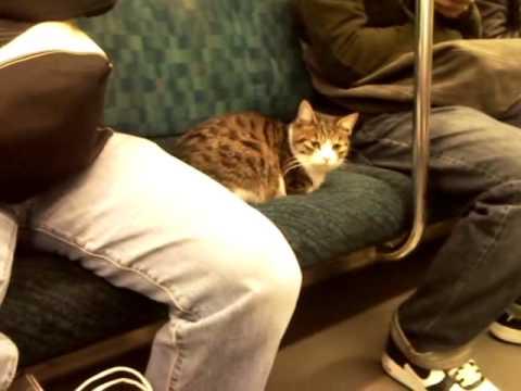 「[猫]山手線の座席に行儀良く座るネコがかわいい。」のイメージ