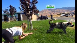 Download Youtube: Hope For Paws rescuer dragged by 110 pound dog as she tried to save him!  EPIC VIDEO!