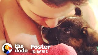 Family Fosters A Pair Of Puppies — And The Dad Falls In Love   The Dodo Foster Diaries by The Dodo