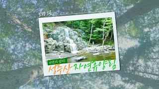 보령줌인 | 보령 그곳, 자연의 쉼터! 성주산 자연휴양림