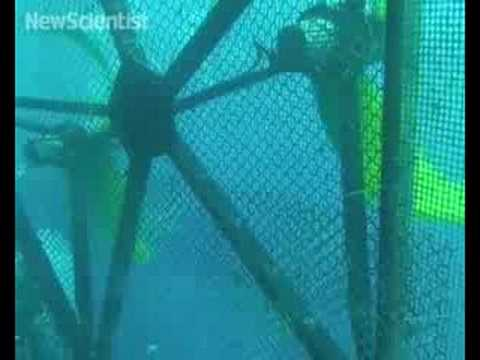 Mobile fish farms could soon navigate the oceans