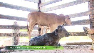 Agro Record na íntegra - 05/Janeiro/2020 - Bloco 2