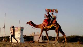 Camel Riding is most entertaining Ride