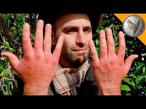 Animal Expert Coyote Peterson s Worst Insect