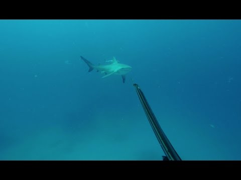 Spearfishing Australia - The Island_Diving destinations. Best of the week