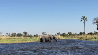 On a motorized boat trip through the channels of the Delta, Jessica Silber, GeoEx's Director of Africa, Turkey & the Middle East, saw this lone male elephant...