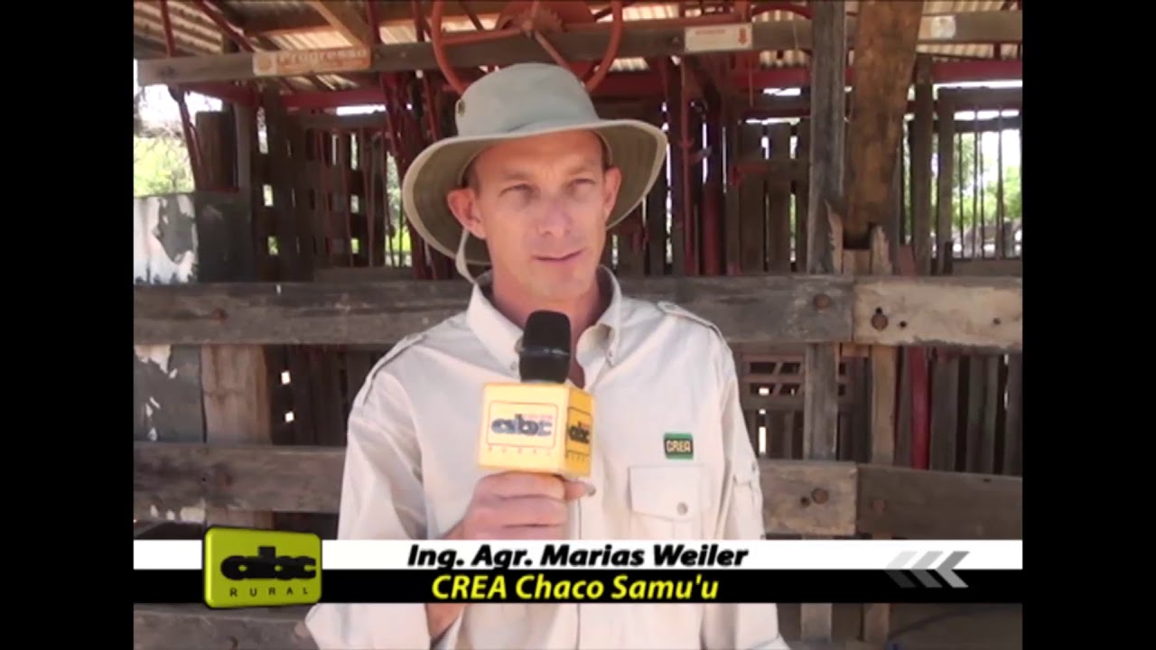 Uso del pesaje electrónico en ganadería