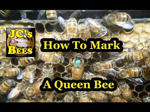 Marking queen bees