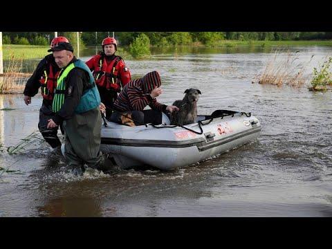 Tierheim wegen Überschwemmungen in Polen von Anwohner ...