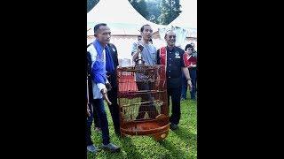Video Ini Burung Jokowi yang Kalah di Lomba Kicau Piala Presiden MP3, 3GP, MP4, WEBM, AVI, FLV Maret 2018