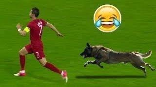 Video Les images les plus drôles  du football | Football Funny |HD MP3, 3GP, MP4, WEBM, AVI, FLV November 2017