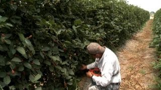 Portugal: Seasonal Workers Sought | European Journal