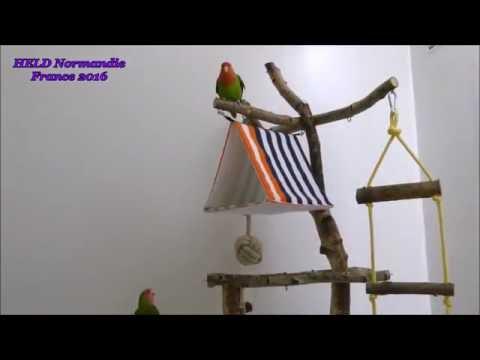 Fabriquer Maisons/Perchoirs/Jouets destructibles pour oiseaux-207-