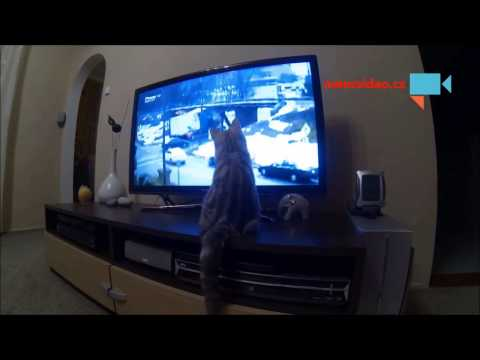 Kotě,které miluje divácké zprávy