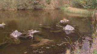 Trailer- Aquaculture