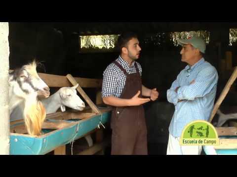 Escuela de campo: Sistemas caprinos de producción de leche - 23 de julio