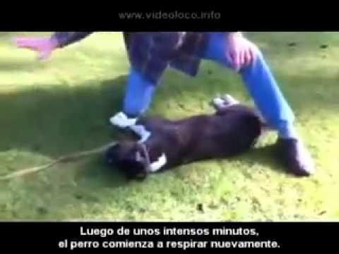 Cómo reanimar a un perro