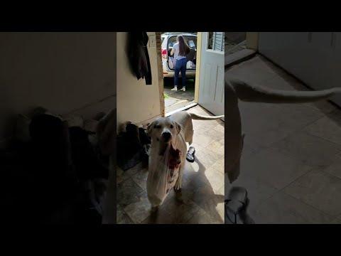 Onkohan kasseissa koiranherkkuja – Innokas ostosten kantaja hommissa