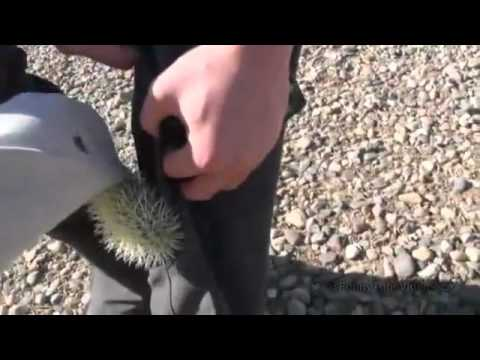 0 A Friend Kicks a Cacti Into Another Friends Leg!