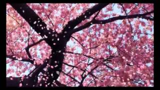 Video Inuyasha's Lullaby 1 Hour MP3, 3GP, MP4, WEBM, AVI, FLV Juli 2018