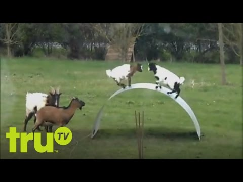 Top Funniest – Animals On The Playground