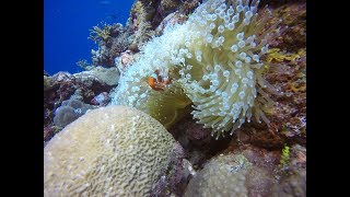 In almost 15 years of diving, this has to be some of the most diverse diving I have done. From WWII wrecks, macro to coral and...