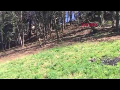 Rinasce il parco di Villa Calderara a Gallarate