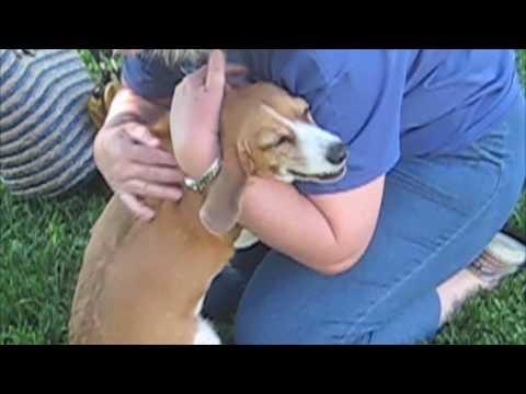 這一家人出遠門幾天回家時,這就是他們家裡的狗狗的反應。看得我又哭又笑!